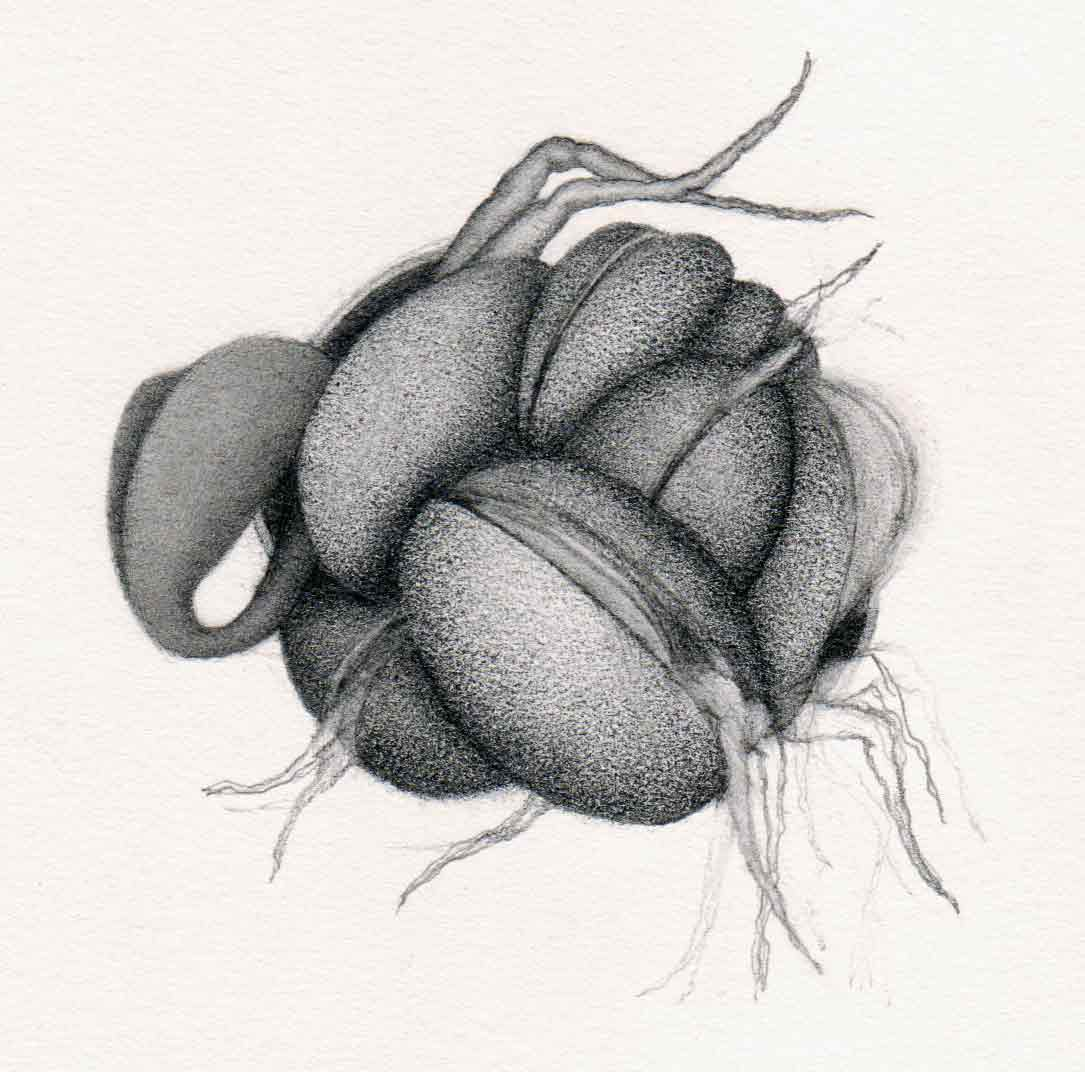 sprout – organic form drawing transformed into 3d fantasy – carol's