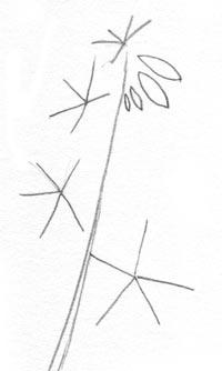 Wild Flower Guidelines