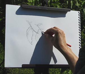 Vary Line Expressive Line Drawing Demo C. Rosinski