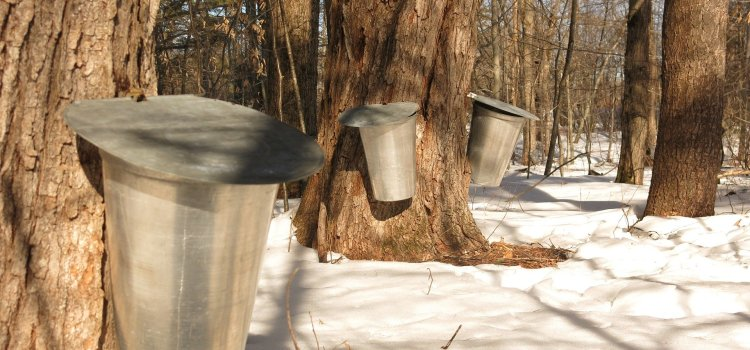 Best Vermont Maple Syrup Tour With Sugarbush Farm