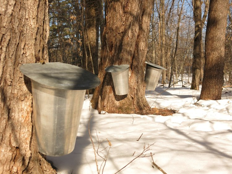 Best Vermont Maple Syrup Tour
