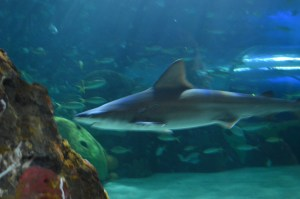 These shark look meaner than they actually are.