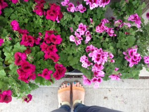 From where I stand, these pretty pink flowers just brightened my mood :).
