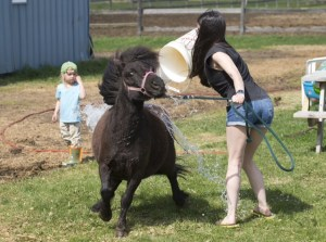 It was a bath day and Nova was scared of the hose and subsequently buckets of water. Isn't she the darnedest thing?  Photo credit to Stephen Thorne: http://www.thornefoto.com/ He takes seriously amazing photos!