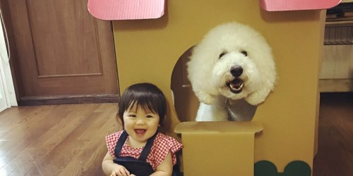 The Adorable Friendship Between Mame And Riku, A Little Japanese Girl And A Giant Poodle