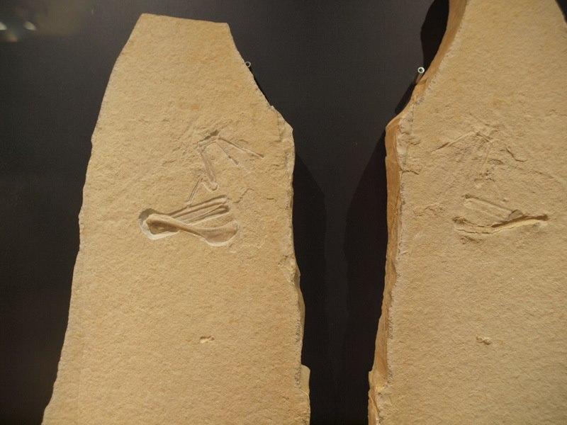 Archaeopteryx 10