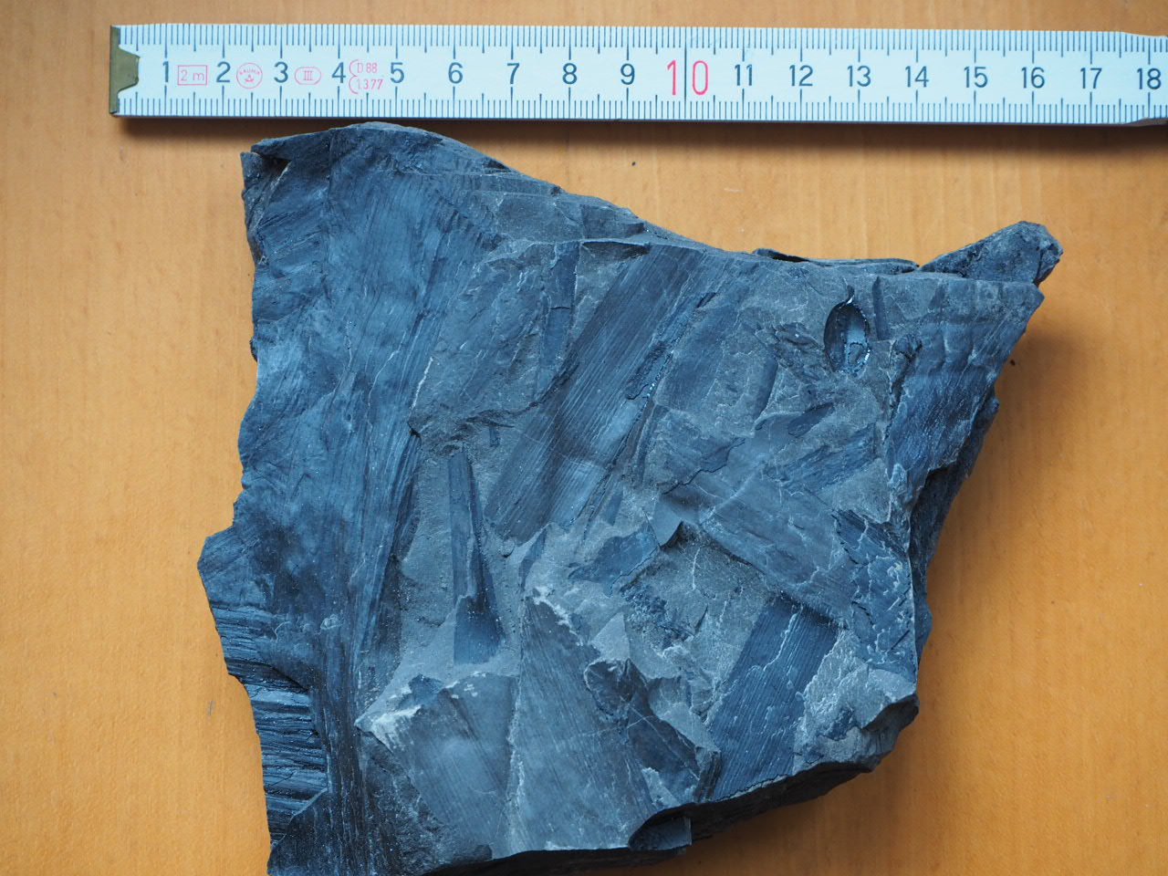 Schachelhalm-Fossilien