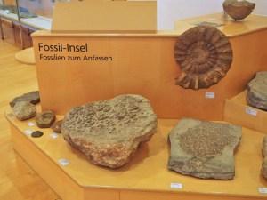 Fossilien zum Begreifen
