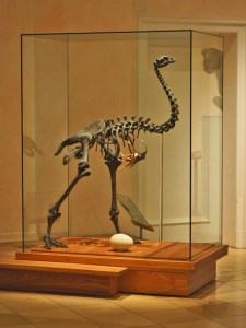 Moa-Skelett