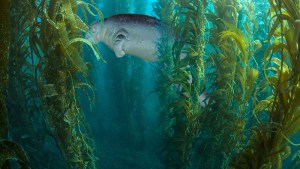 Fotomontage der Steller Seekuh im Kelpwald