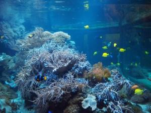 Weichkorallenbecken mit Doktorfischen und Riffbarschen