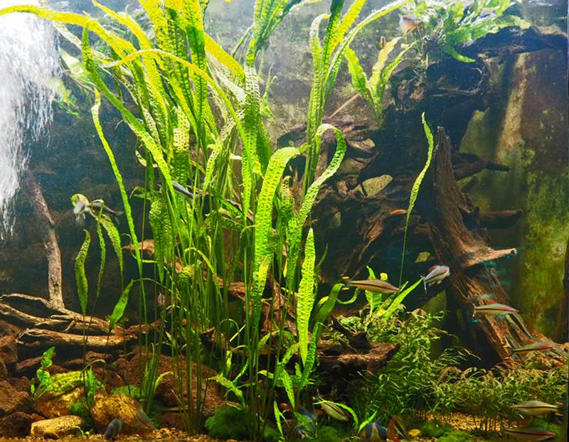 Asien-Aquarium