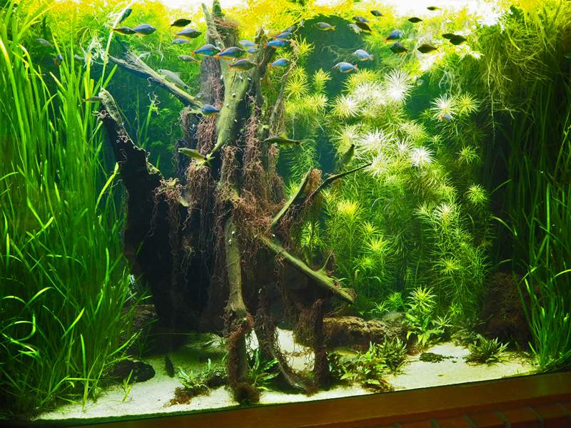 Pflanzenaquarium