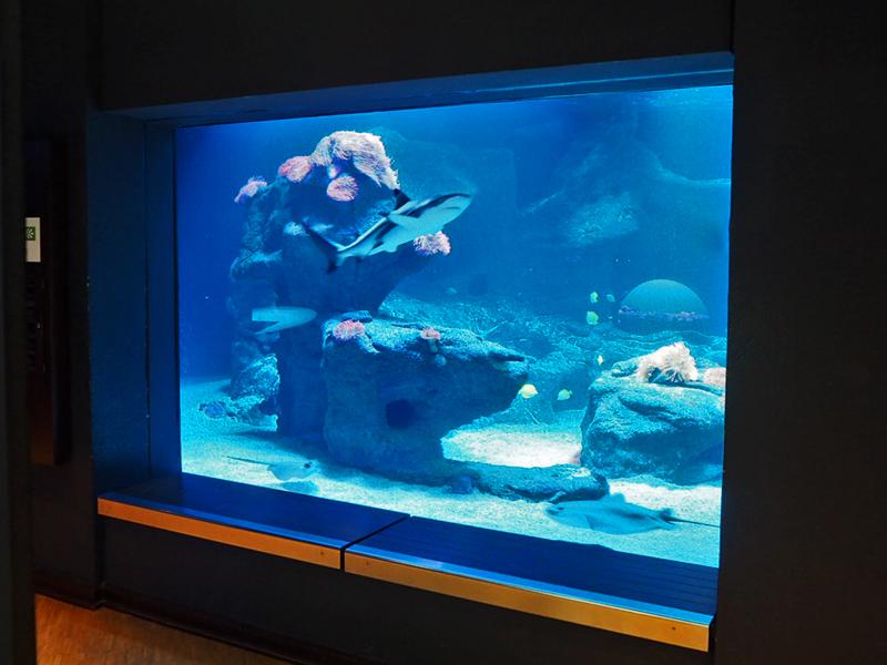Seitenscheibe des Großbeckens mit Riffhai