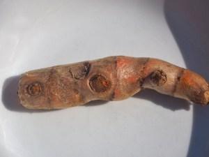 Ein etwa fingergroßes Stück Kurkuma-Rhizom. Ich habe zwei davon verwendet.