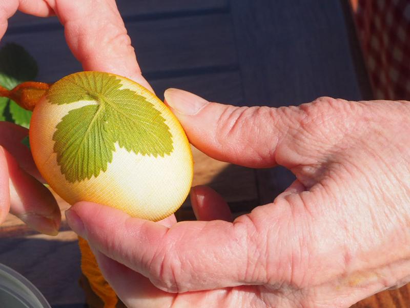 zwei Hände halten ein Ei, auf dem ein Erdbeerblatt mit einem Feinstrumpf festgehalten wird.