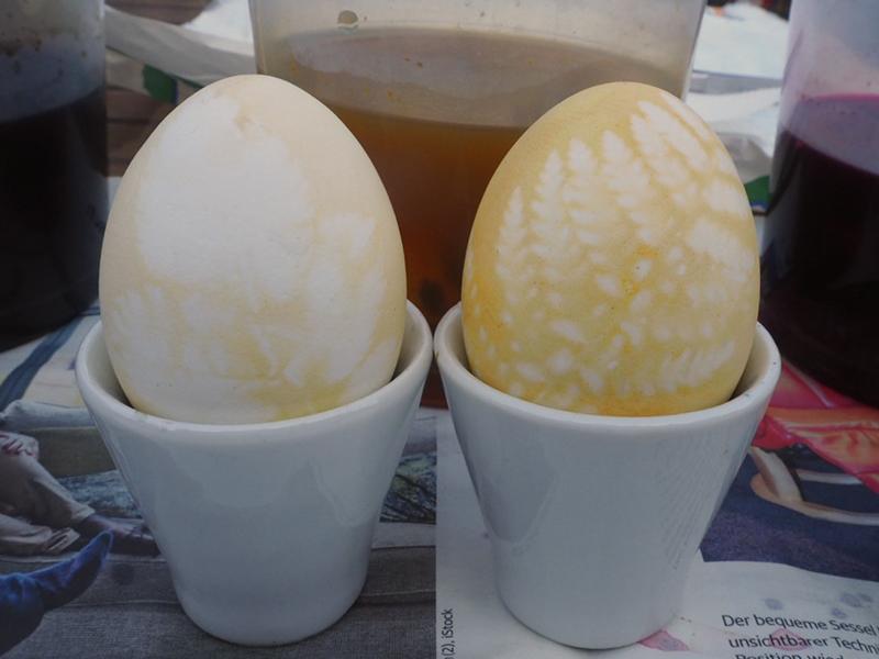 zwei gelbe Eier, das kürzer gefärbte ist blasser