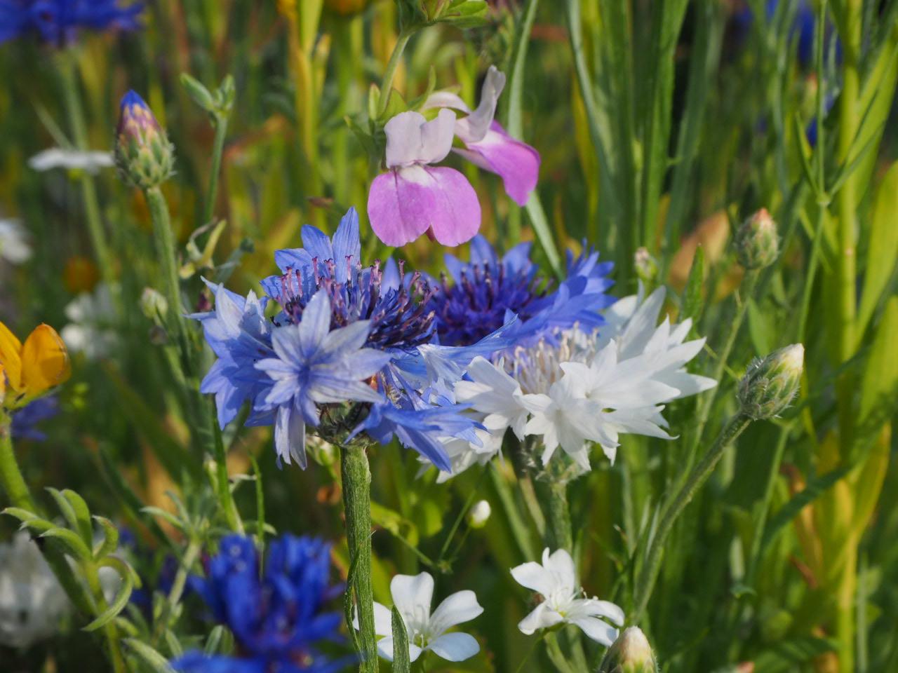 Japanische Blumenwiese in bunt