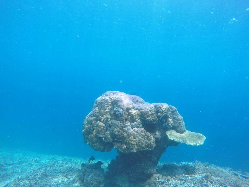 Nur wenige Korallen haben überlebt