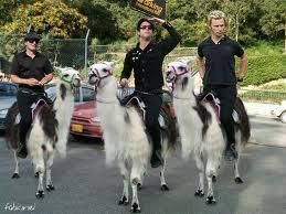 llama riding