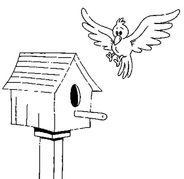 bird about to land on bird house coloring pages  best