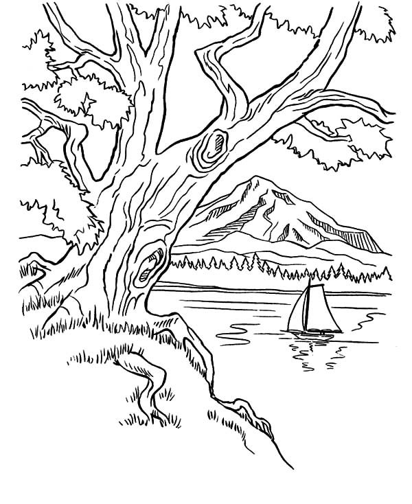 trees on mountains area on arbor day coloring pages  best