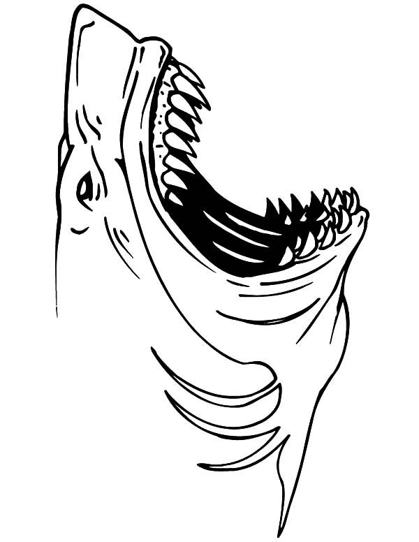 great white shark jaws coloring pages  best place to color