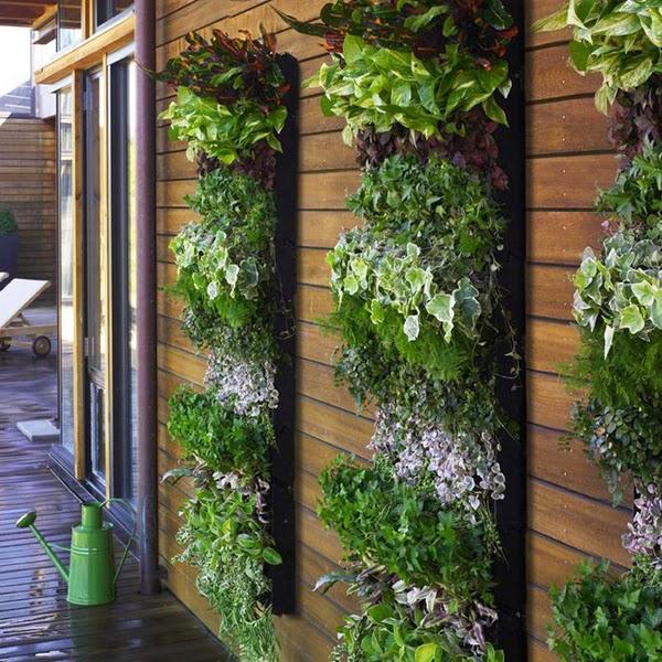 Resultado de imagem para plantas nas paredes
