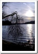 Una rama rota...