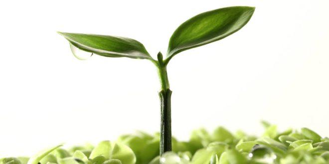 La salud y las plantas