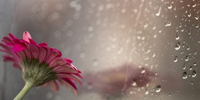 La felicidad de hoy puede ser las lágrimas de mañana