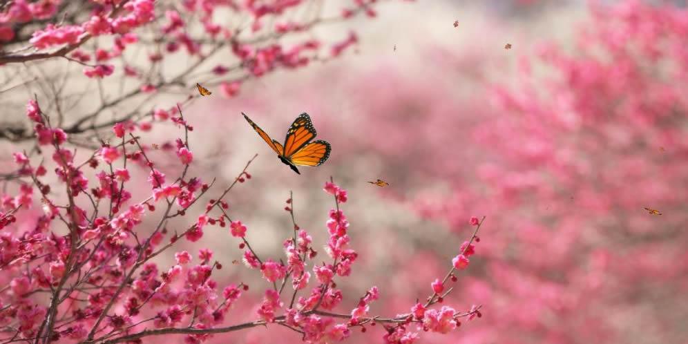 La paz que da la naturaleza