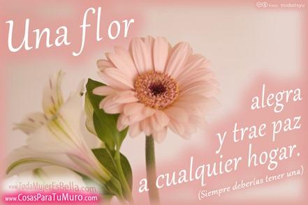 Una flor en casa