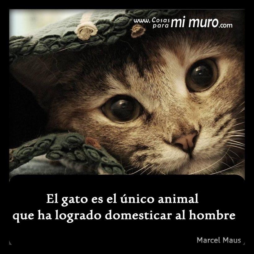 El gato es el único animal que ha logrado domesticar al hombre
