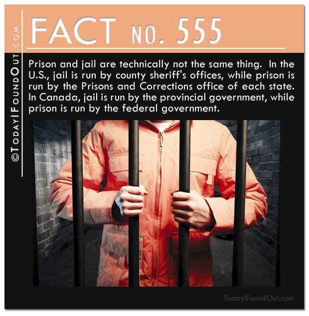 TIFO Quick Fact 555
