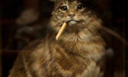 Meow-gic