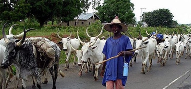 Miyetti Allah blames governors for farmers-herdmen clash
