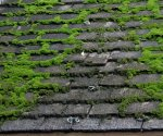 Green moss growing on roof.