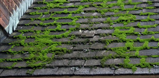 How to Remove Moss from a Roof – Lichen Removal From Roof Shingles