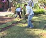 Laying sod in yard