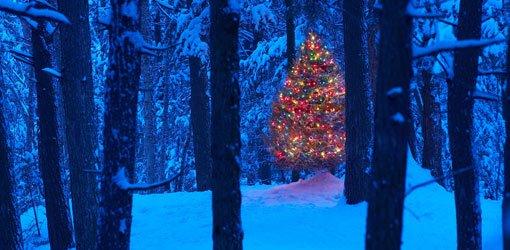 Top Ten Christmas Lawn And Garden Gift Ideas For 2010