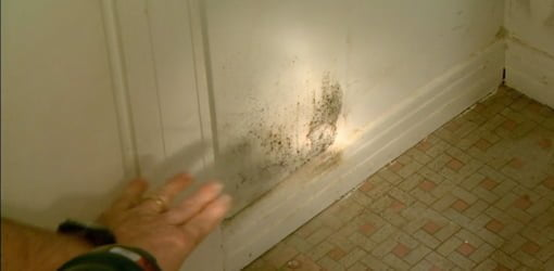 mold and mildew prevention and removal for your home   today's