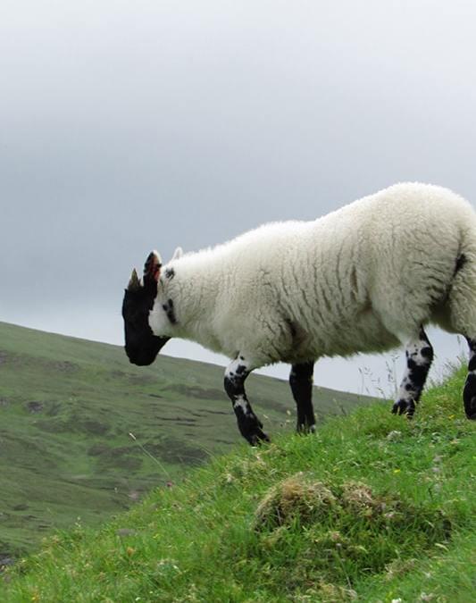 One Clan Tours Scotland's Highlands