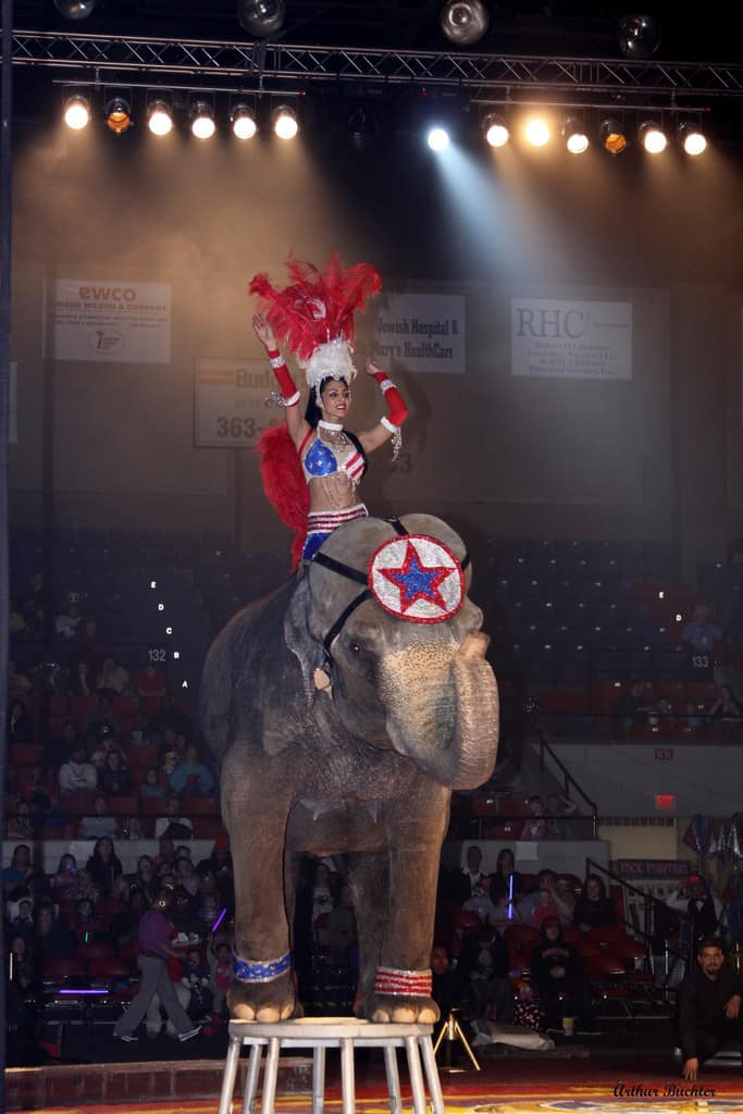 Win Family Four Pack for the Kosair Shrine Circus