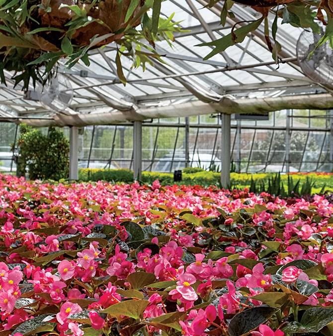 Churchill Downs Flowers