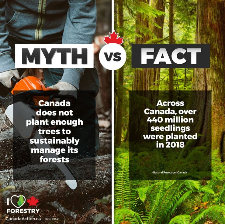 Canadian Forestry Myths vs Facts 2