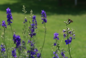 butterflyinpurple