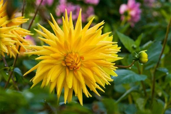 yellowinketchican