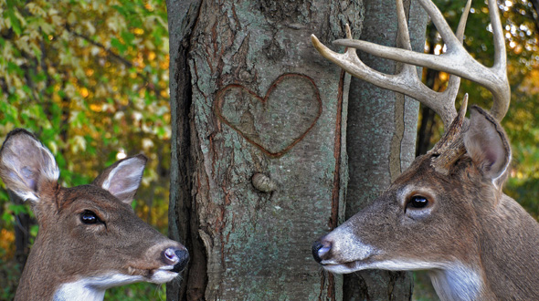 two deer near a tree with bark damage