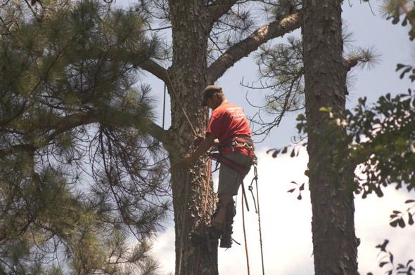 tree pruning and cutting marietta georgia